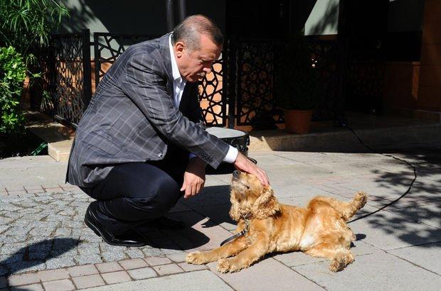 hayvan-sevgisi-ve-erdoğan